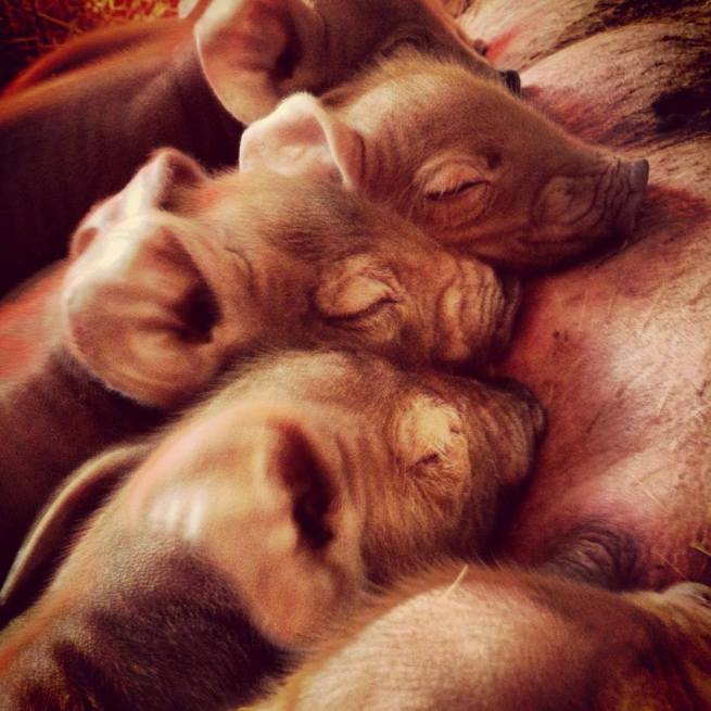 The beauty of a brand new litter of tams and the heartbreak of losing a sweet little babe a day later.
